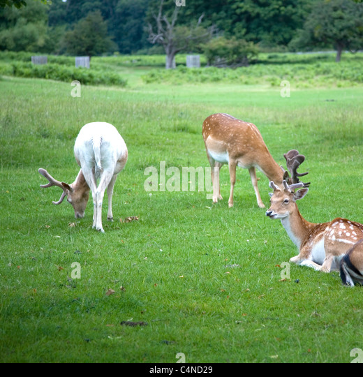 bushy park women Bushy park, co galway we had an amazing stay at glenlo abbey hotel this past as two young women traveling we did notice the lack of young people at.