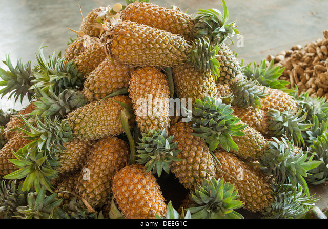 Sri Lanka Pineapple Stock Photos & Sri Lanka Pineapple ...