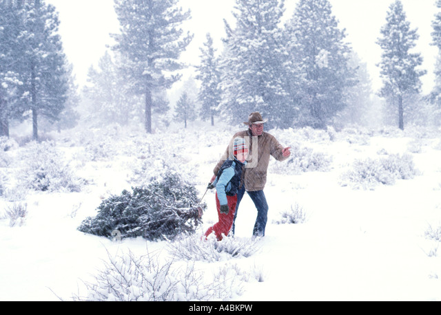 Father U0026 Son Gathering A Christmas Tree In The Middle Of A Snowfall  Snowstorm, As