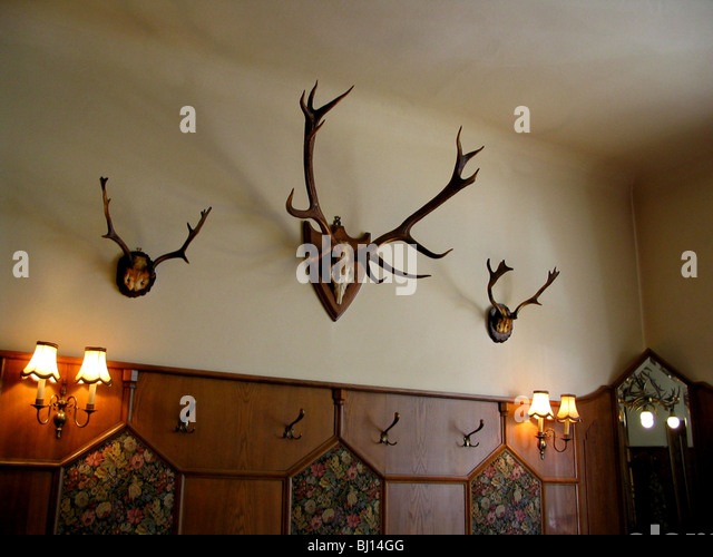 Antlers On Wall Stock Photos Antlers On Wall Stock