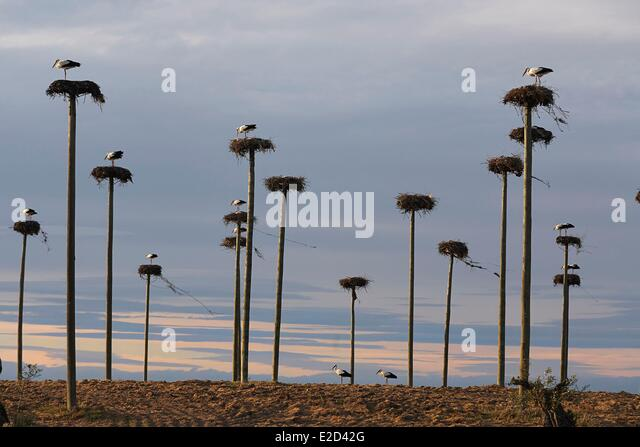 Large Nests Stock Photos Amp Large Nests Stock Images Alamy