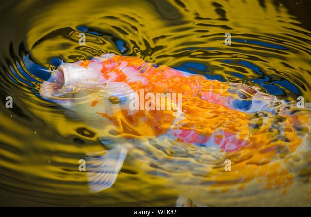 Carp Island Stock Photos Carp Island Stock Images Alamy