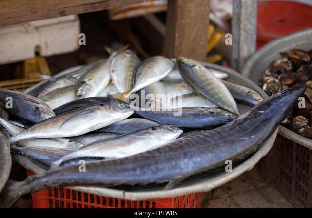 Shark market stock photos shark market stock images alamy for Oriental fish market