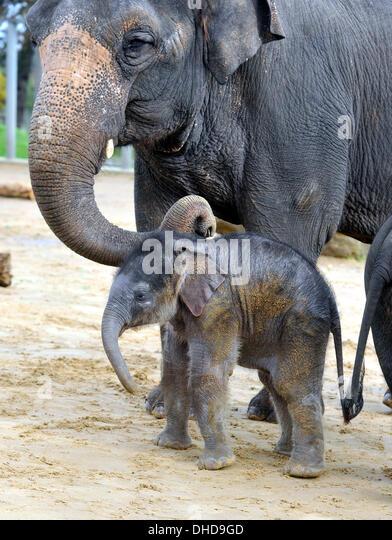 stone asian asian elephant feet stock photos asian elephant feet stock