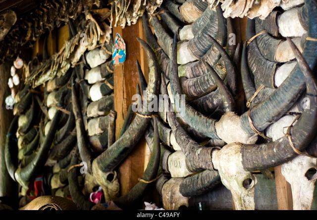 Buffalo Horns Stock Photos & Buffalo Horns Stock Images ... Horns Inda House