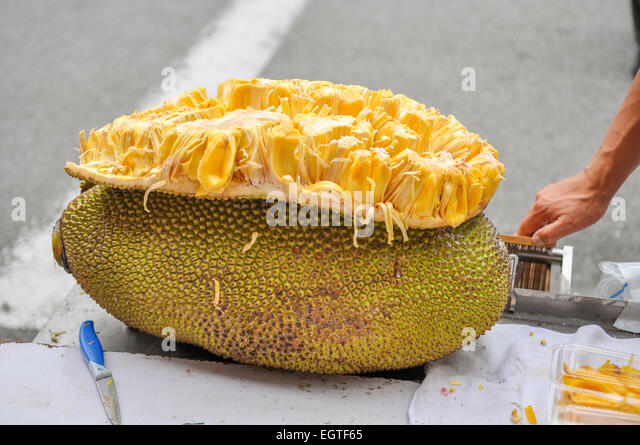 fruit of the loom durian fruit