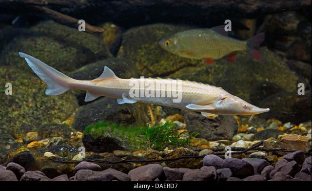 delta eco tourism museum centre aquarium in tulcea danube delta ...