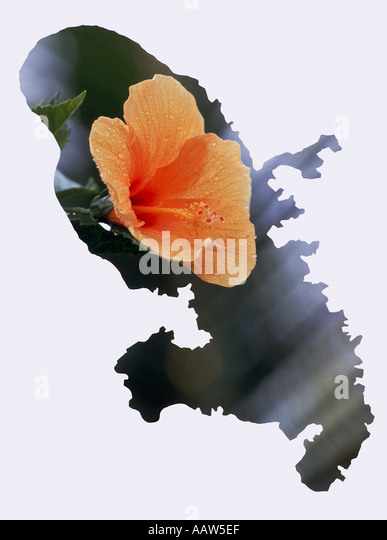 Orange Hibiscus In The Shape Of The Martinique Map Stock Image
