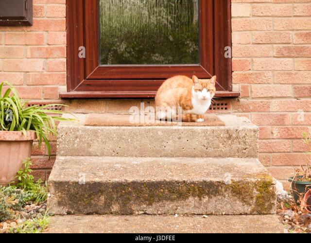 Front Door Step front door step stock photos & front door step stock images - alamy