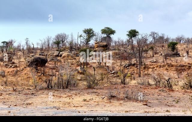 Desert plains plant dry stock photos desert plains plant for Landscaping rocks corpus christi