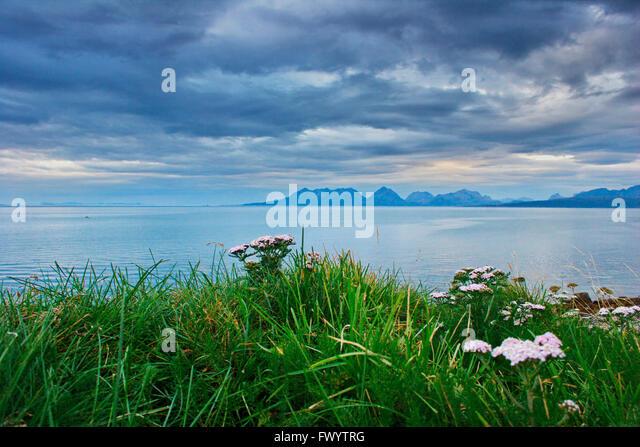 Send Flowers To Jersey Channel Islands