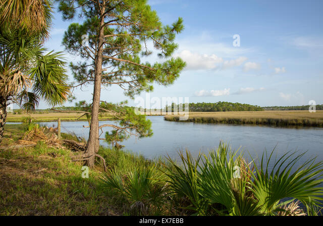 Seagrasses stock photos seagrasses stock images alamy for Fish creek florida