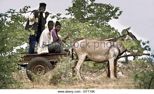 Animals Pulling Wagon : Donkey cart passengers stock photos
