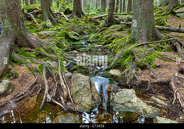 Marshy woods stock photos marshy woods stock images alamy - Gloriette fer smeden ...