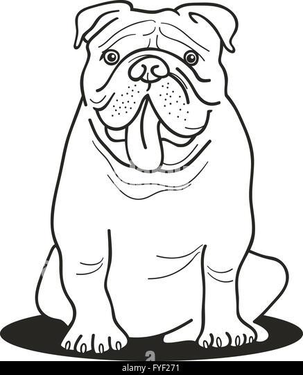 bulldog drawing stock photos bulldog
