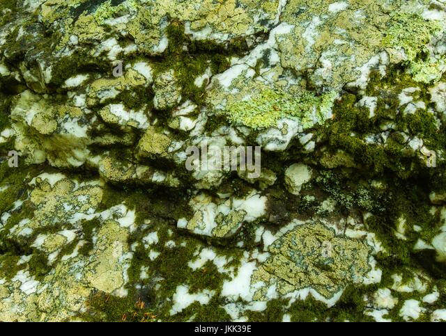 Lichens & Moss on a Boulder - Stock Image