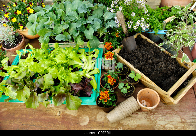 Garden tools and vegetables stock photos garden tools for Gardening tools vancouver