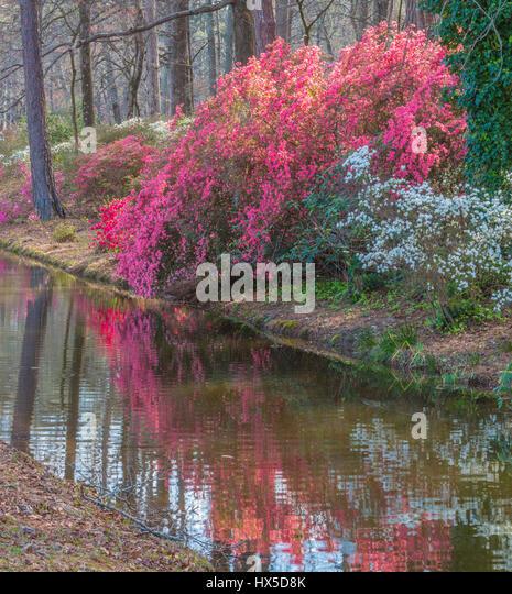 Callaway Gardens Stock Photos & Callaway Gardens Stock