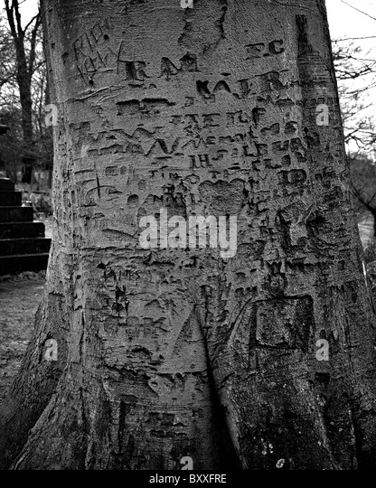 A Tree Trunk Is Covered With This  Letters