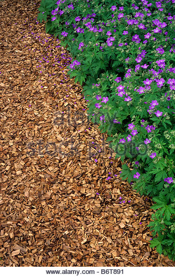 Wood Chip Path Stock Photos Amp Wood Chip Path Stock Images