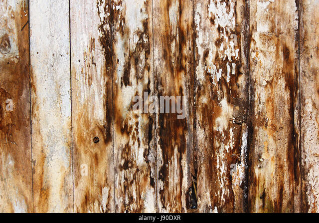 mold and fungus on damp spruce planks, result of water infiltration in building - Stock Image