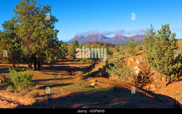 Australian native trees stock photos australian native for South australia landscape