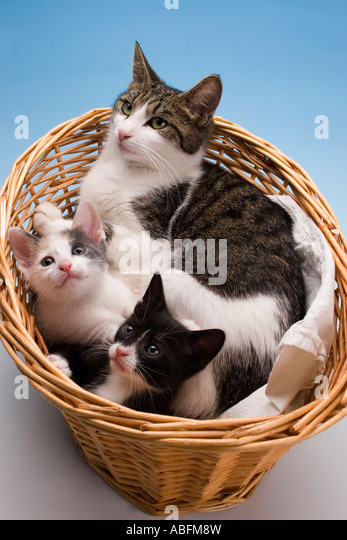 Newborn Kittens Domestic Mother Stock Photos & Newborn ...