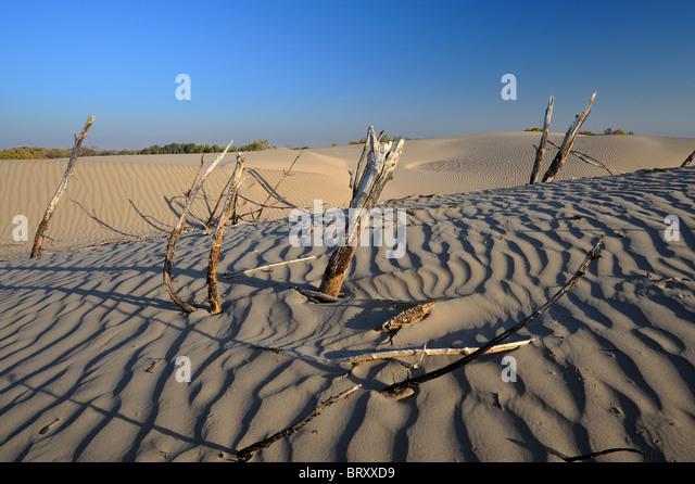 Moreton Island Desert Dead Tree