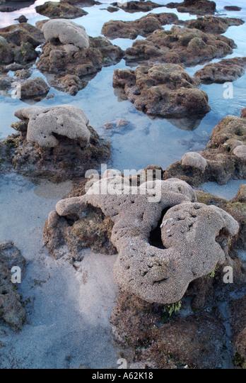 Bathtub Reef Beach Stock Photos & Bathtub Reef Beach Stock ...