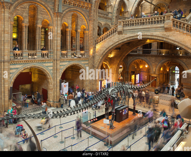 British Natural History Museum Dinosaurs