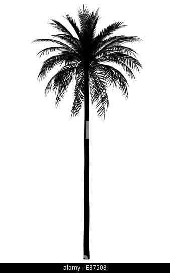 silhouette date palm tree - photo #10