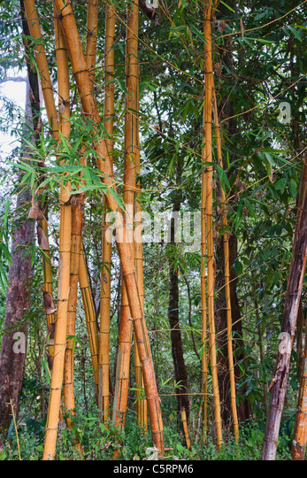 Bamboo poles stock photos images alamy