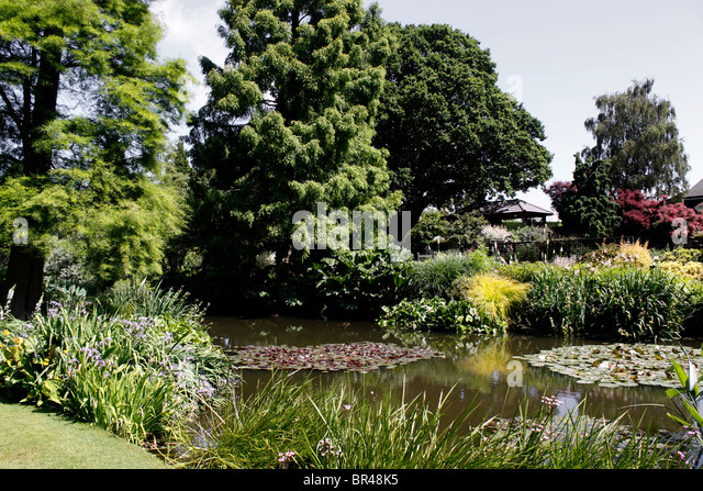 Marginal plants stock photos marginal plants stock for Ornamental pond