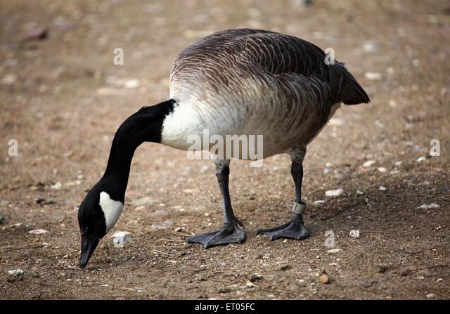 canada goose shop prague
