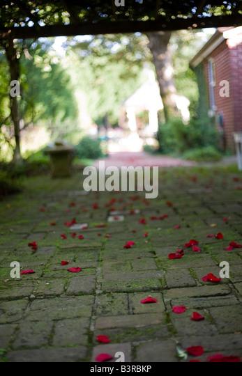 gazebo trellis gazebo rose garden stock photos gazebo rose garden stock images