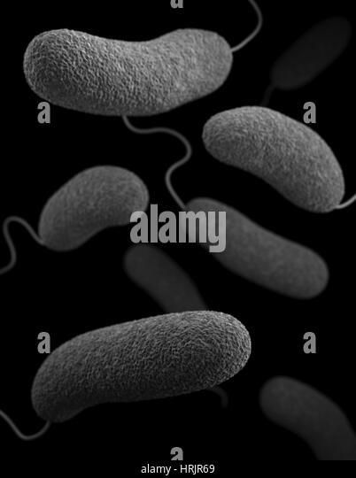 Vibrio parahaemolyticus