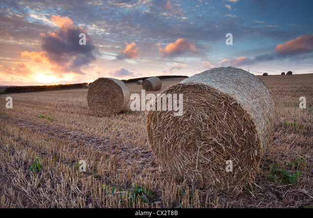 Harvest Stock Photos Amp Harvest Stock Images Alamy