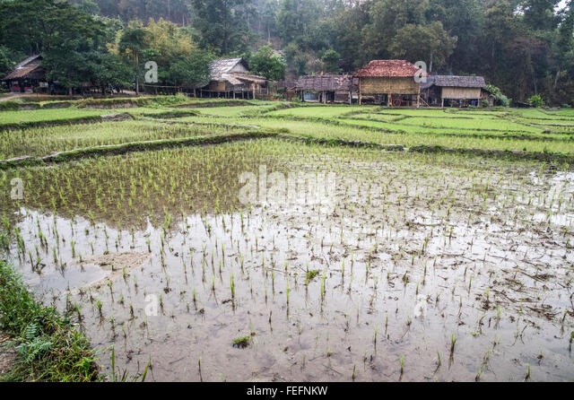 Northern Thailand Fields Stock Photos & Northern Thailand ...