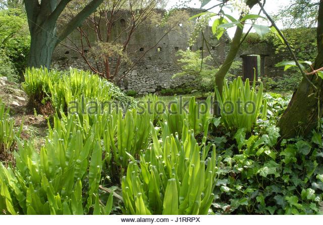 Ninfa italy stock photos ninfa italy stock images alamy - I giardini di alice latina lt ...