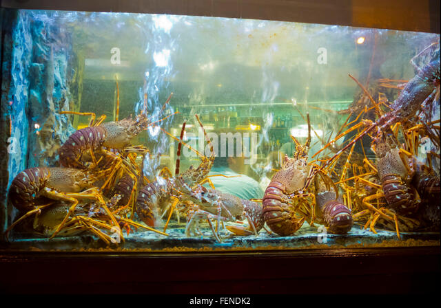 Seafood tank stock photos seafood tank stock images alamy for Shrimp fish tank