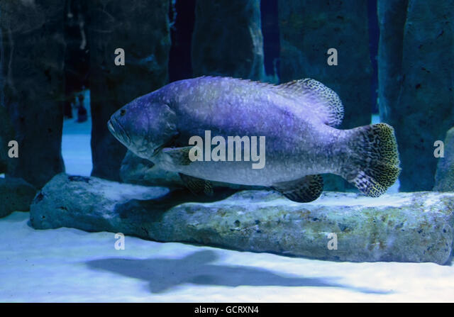 Underwater photography deep stock photos underwater for Fish swimming backwards