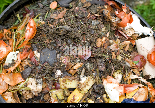 worms visible in kitchen waste in top of black plastic recycled composting bin uk stock