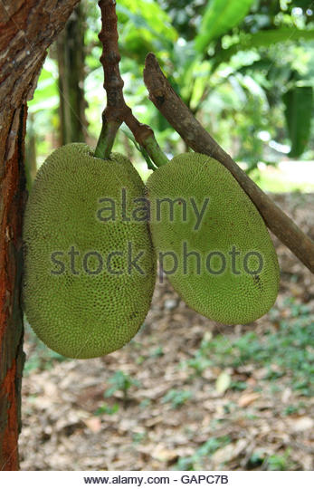 hanging fruit basket durian fruit