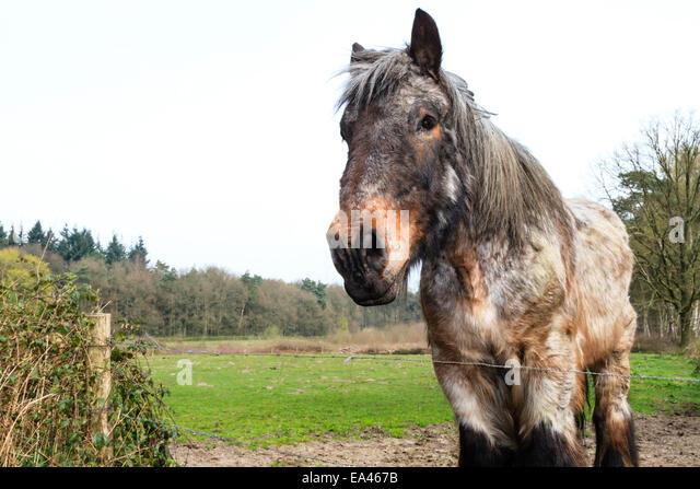 fluffy horses - photo #34