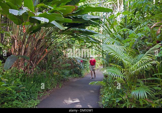 Hawaii Tropical Botanical Garden Is A 37 Acre Nature Preserve And Sanctuary  On Onomea Bay