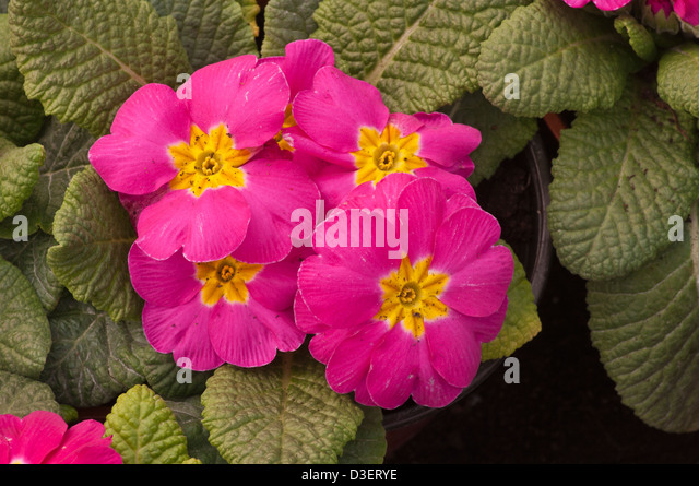 Spring flowers in uk choice image flower decoration ideas spring flowers uk image collections flower decoration ideas spring flowers uk image collections flower decoration ideas mightylinksfo
