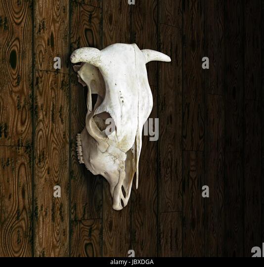 cow skull and desert - photo #35