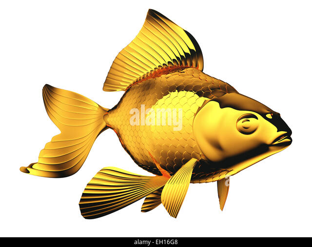 Pectoral fins stock photos pectoral fins stock images for Fish with scales and fins