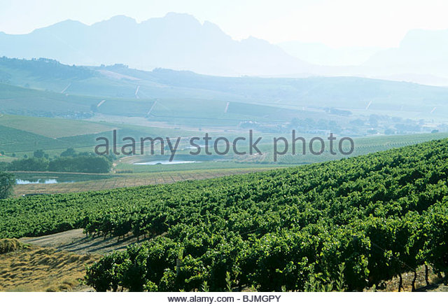 Stellenbosch vineyard stock photos stellenbosch vineyard for Jardin winery south africa
