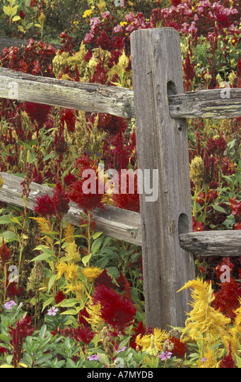 Tennessee pigeon forge stock photos tennessee pigeon for Mountain flower cabin pigeon forge